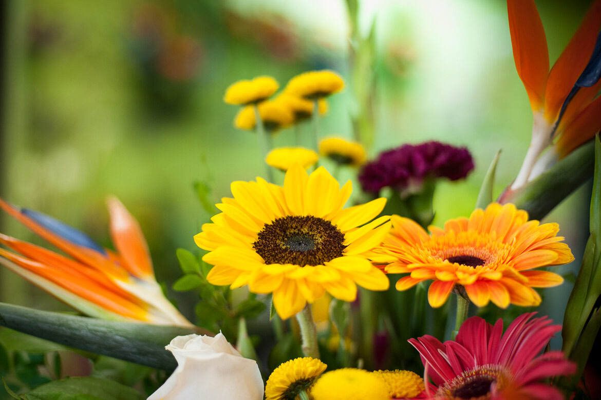 How To Take Care Cut Flowers